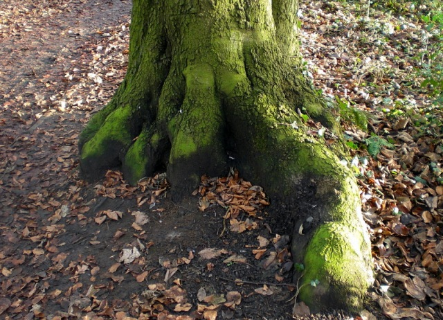 Dinosaur Tree Foot