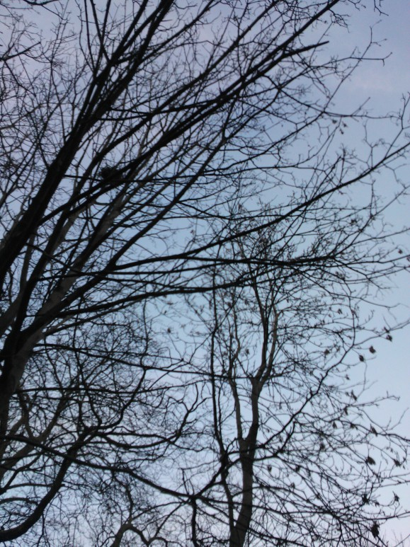 Winter Trees, Kelvingrove Park