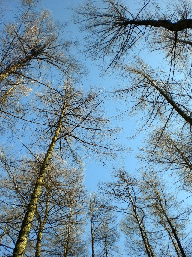 Scot's Pine - Devilla Forest - You Could Feel the Sky