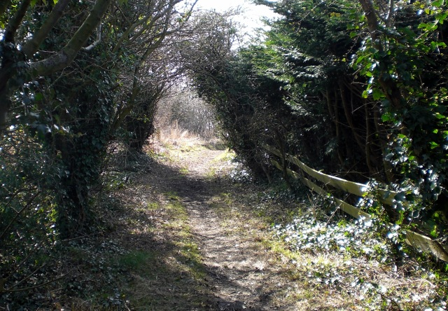 Windylaw Path II