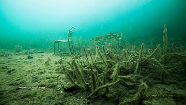 Underwater Chair and Pike ©strayseal