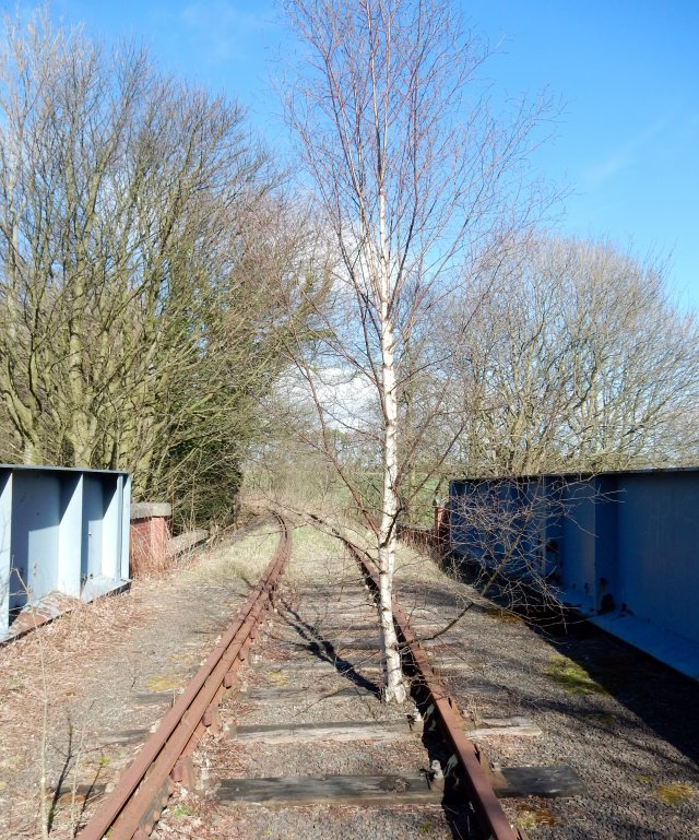 Old Branch Line