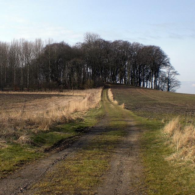 Windylaw Path